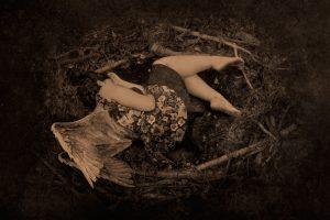 Bird Nest. Nido de pájaro.