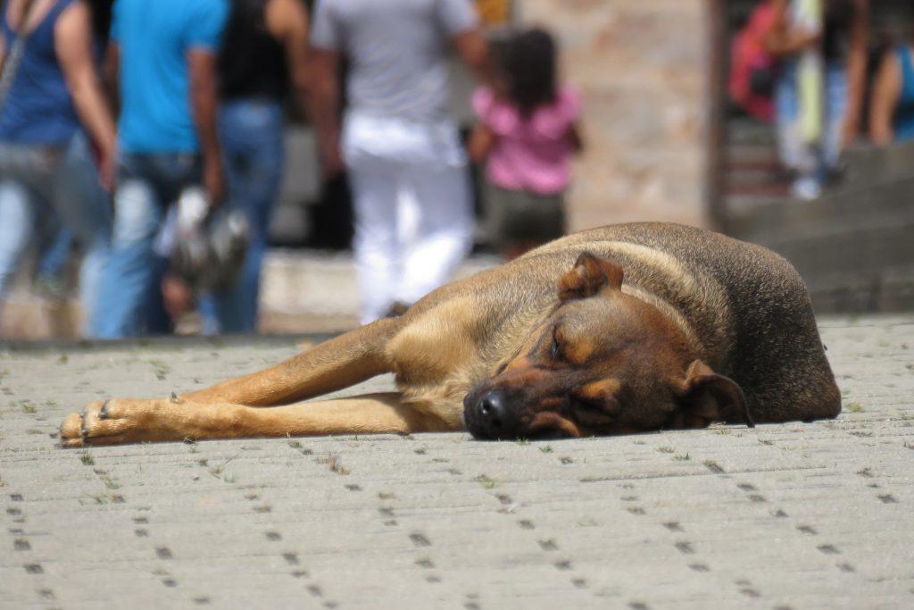 Como un perro vagabundo…
