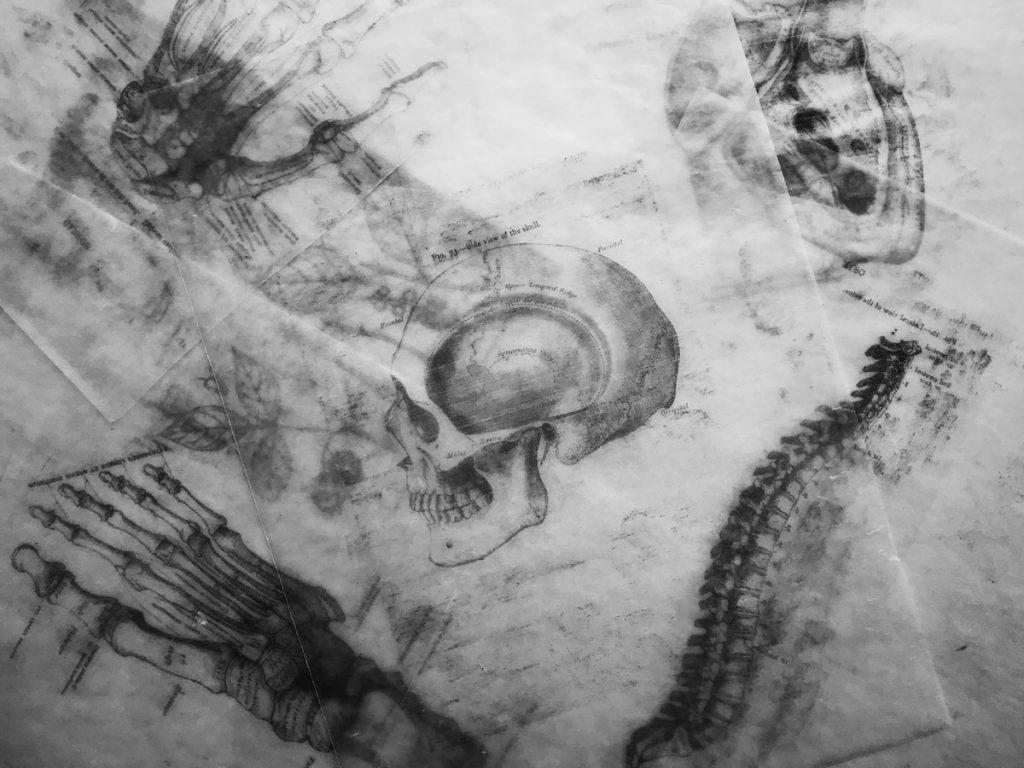 anatomy_skull_dibujo