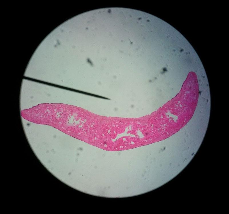 bacteria_escritura_narrativa_transmedia